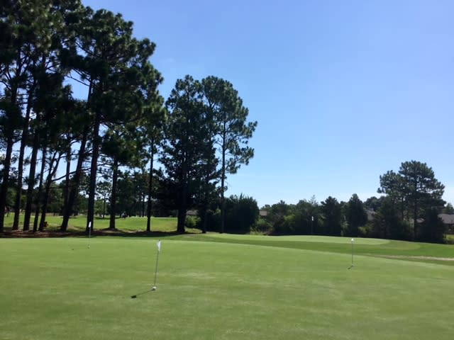 Trees lining the putting green at Inland Greens Golf Course in Wilmington NC