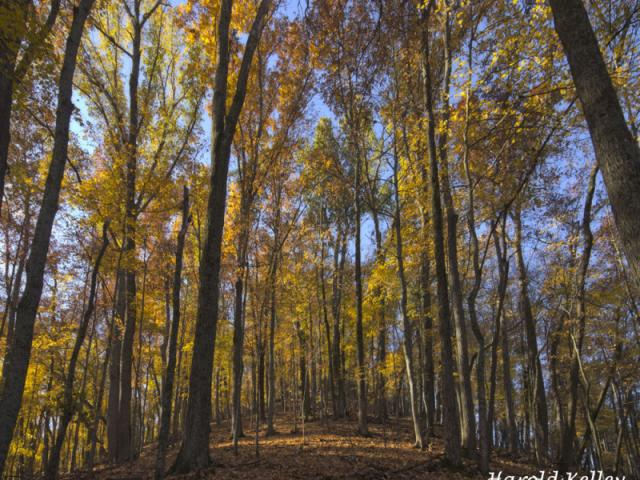 Earth Day @ Vernon Douglas State Nature Preserve