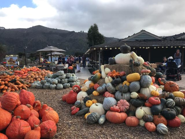 Earthbound Farms Pumpkin Patch