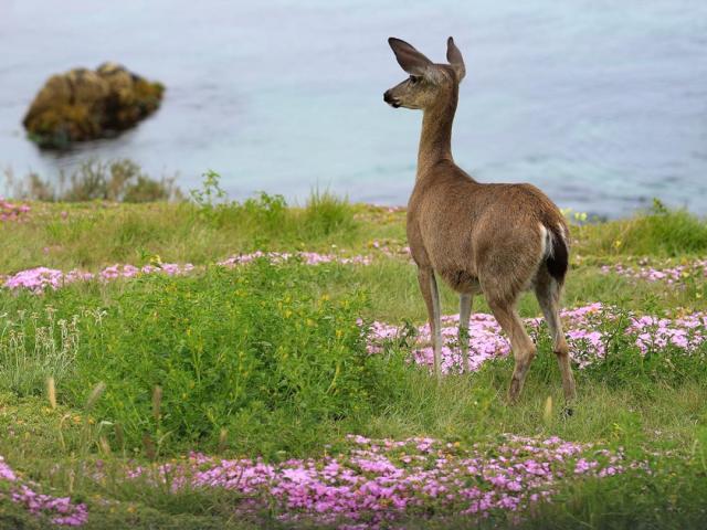 Asilomar State Park