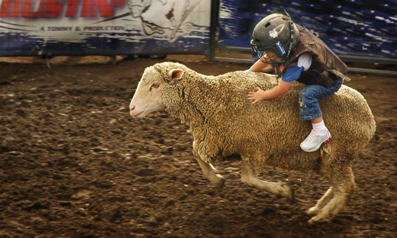 Mutton Bustin at YMBL Fair