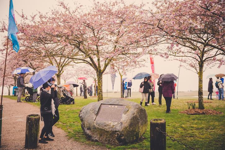 Richmond Cherry Blossom Festival - Photo: City of Richmond