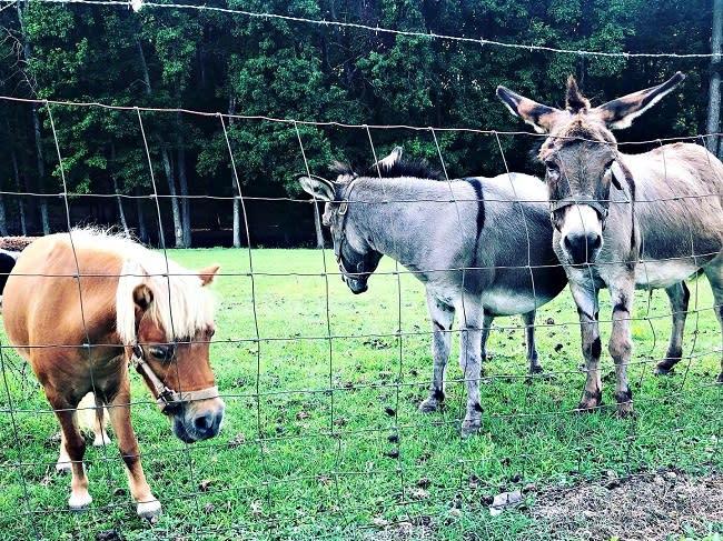 Farm Animals in Rural Orange County