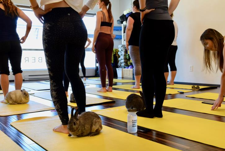 Bunny yoga at Sunberry Fitness