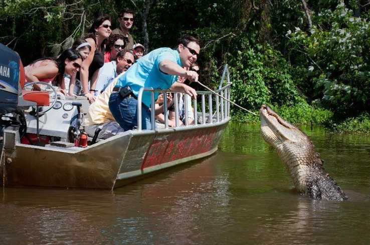 Swamp Tour - Gators