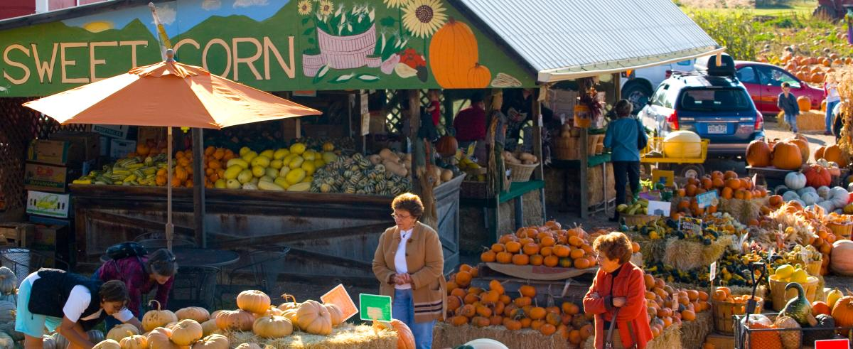 Fall produce at the Munson Farm Stand