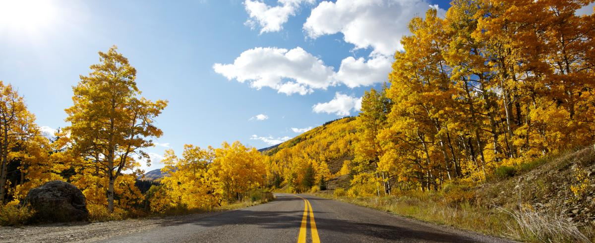 Peak to Peak Scenic Byway road surrounded by trees with yellow leaves