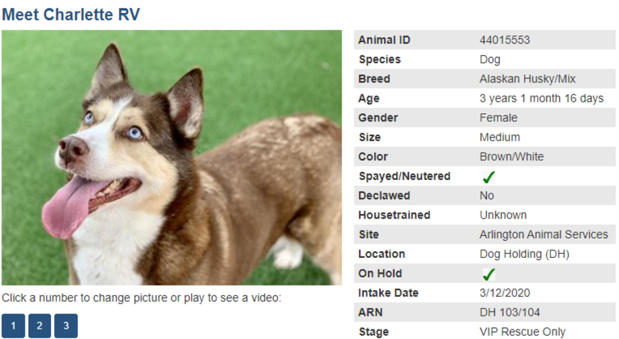 dog 1 adoption blog