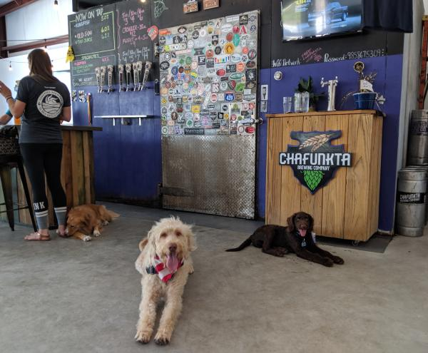 Chafunkta Brewing Company Dogs