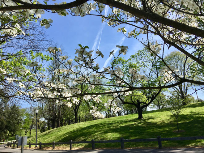 Highland Park - Roanoke