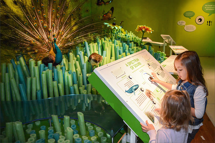 Our Senses at Denver Museum of Nature and Science