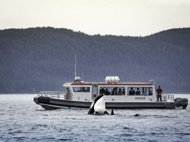 Orca with Gastineau Guiding Vessel