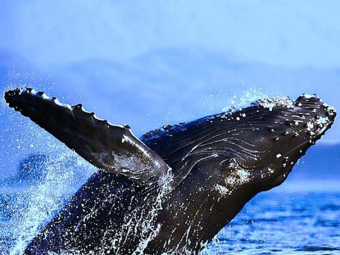 whale photo 1