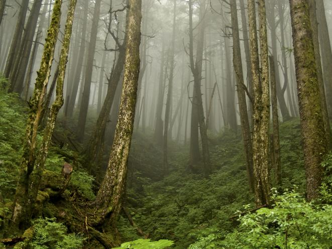 Forest and Fod