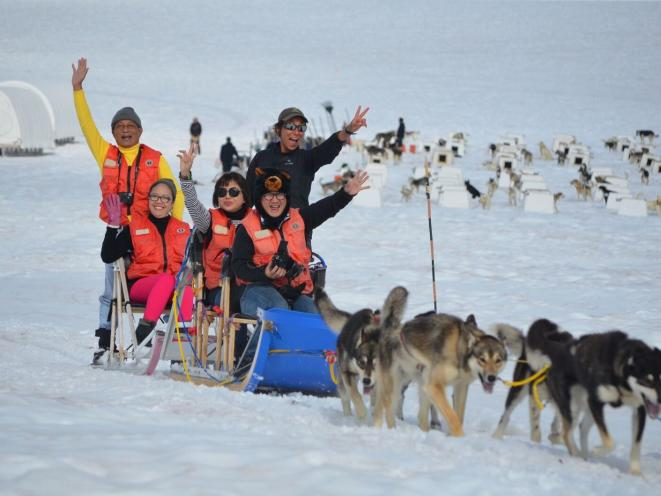 Dog Sledding on the Mendenhall Glacier