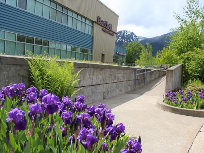 Spring is iris season on the Bartlett campus