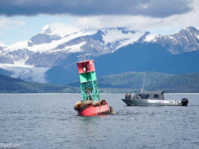 Sealions and Glacier