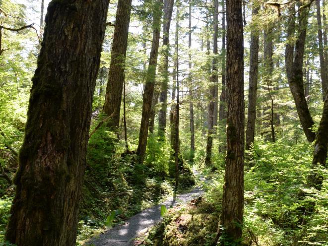 Trail Rainforest