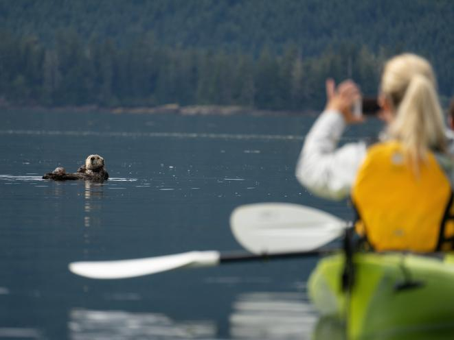 Upclose with Sea Otter by Kayak - UnCruise Adventures