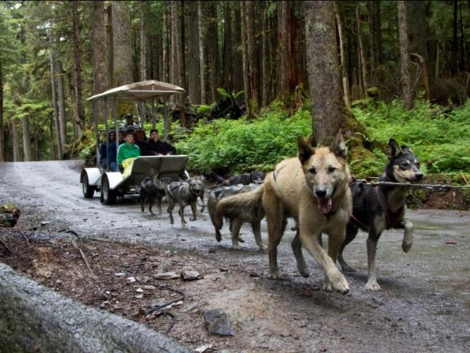 Sled Dogs Pulling Our Custom-Designed Summer Sleds