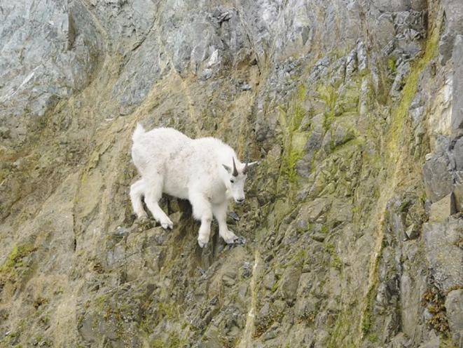 Wildlife Glacier Bay