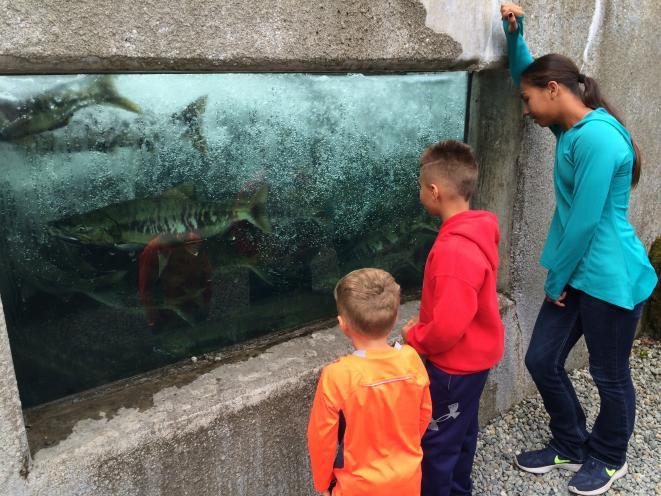 Kids love the hatchery fish ladder!