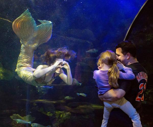 Virginia Aquarium Mermaid
