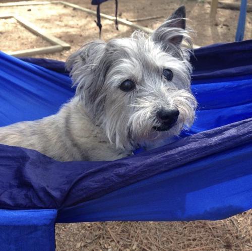Dog at Hammock Garden