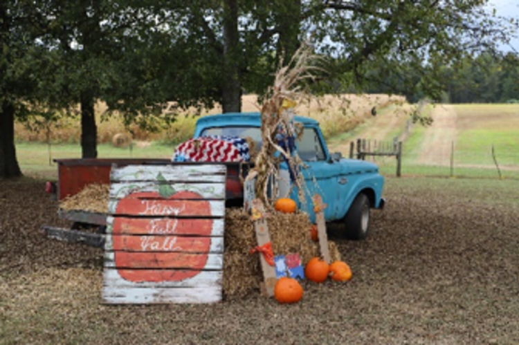 Belue Pumpkin Patch
