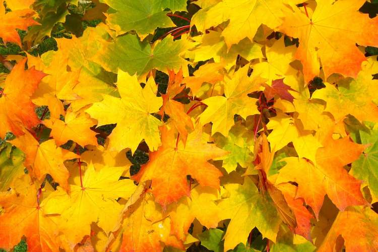 fall_autumn_leaves.jpg