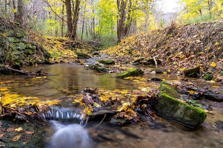 Small Creek at Spring Valley County Park