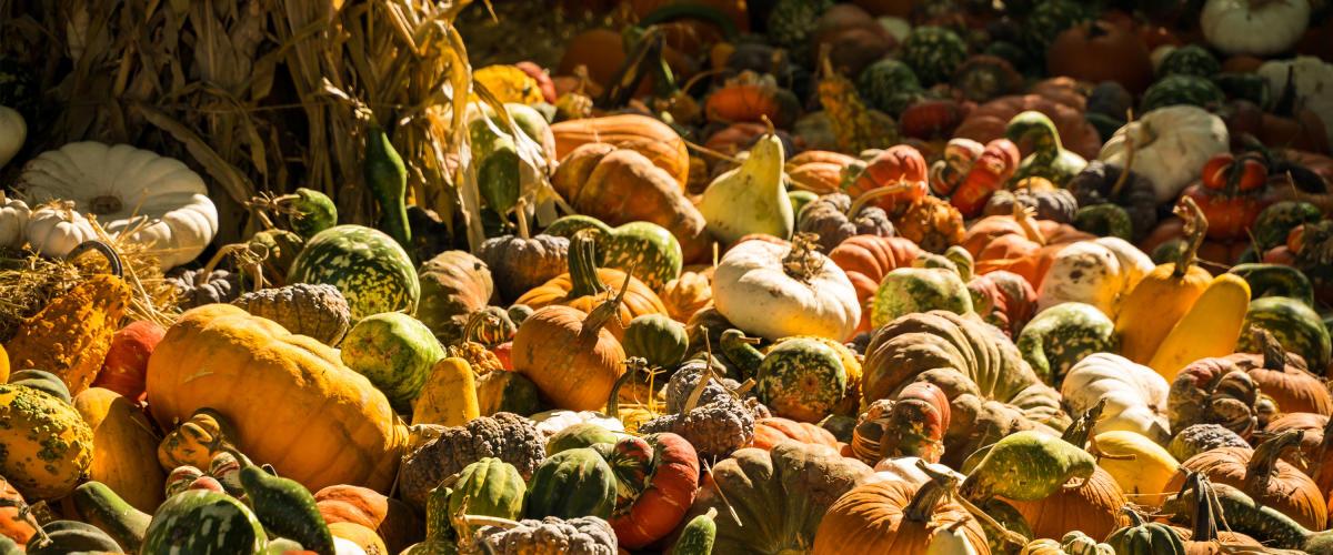 Pumpkinville - Myriad Gardens
