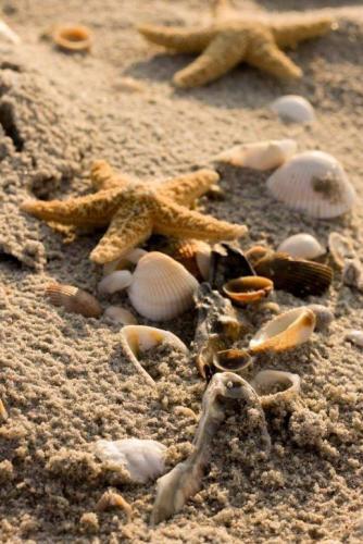 Shells on the beach, Myrtle Beach, SC