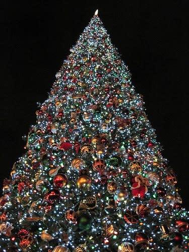 West Windsor, NJ Christmas Tree lighting at Ron Rogers Arboretum