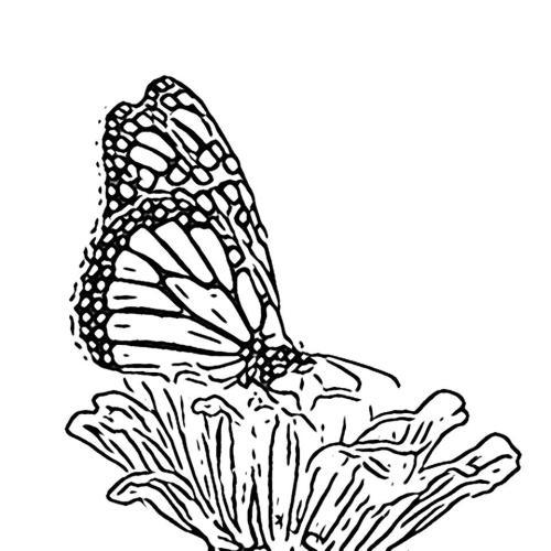 Butterfly Kid