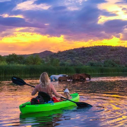 Salt River kayaker Wild Horses sunset crowdriff marketing rights approved cayventures