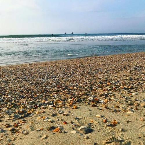 Seashelling in Myrtle Beach, SC