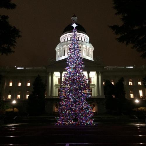 Capitol Christmas Tree Holiday
