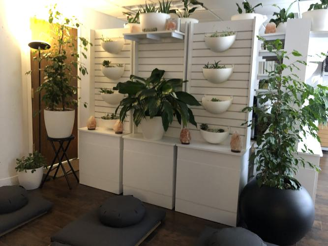 Meditation Studio with plants hanging from the walls and pillows on the floor
