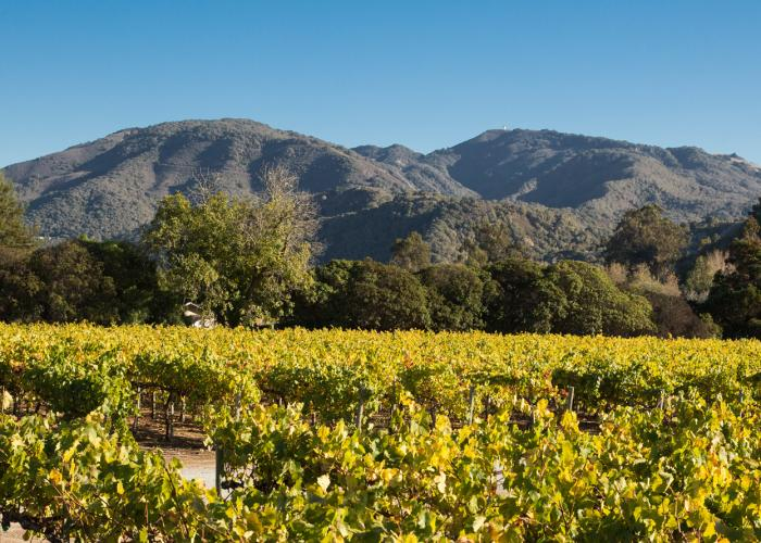 Folktale Vineyards