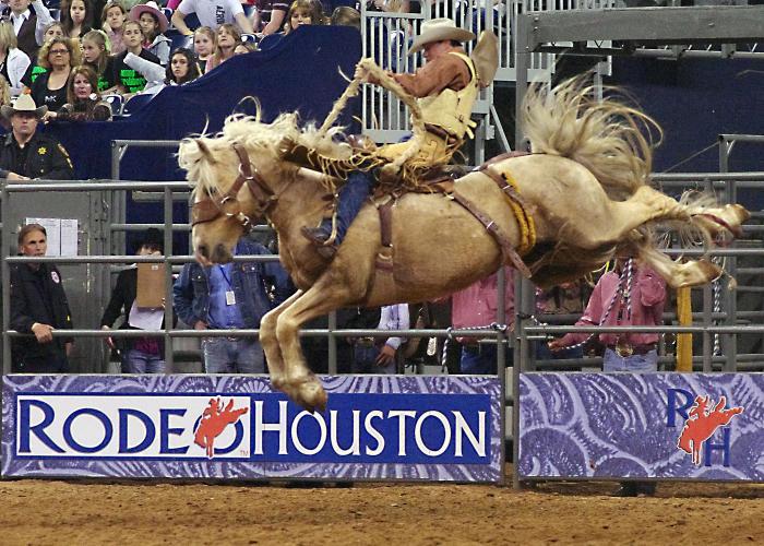 788527df3 Houston Rodeo cowboy riding a bucking bronco