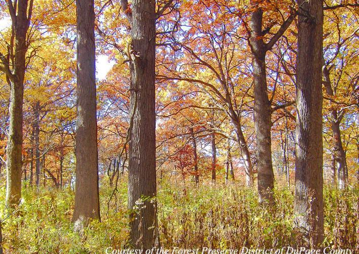 ForestPreserve-PRIMARY.jpg
