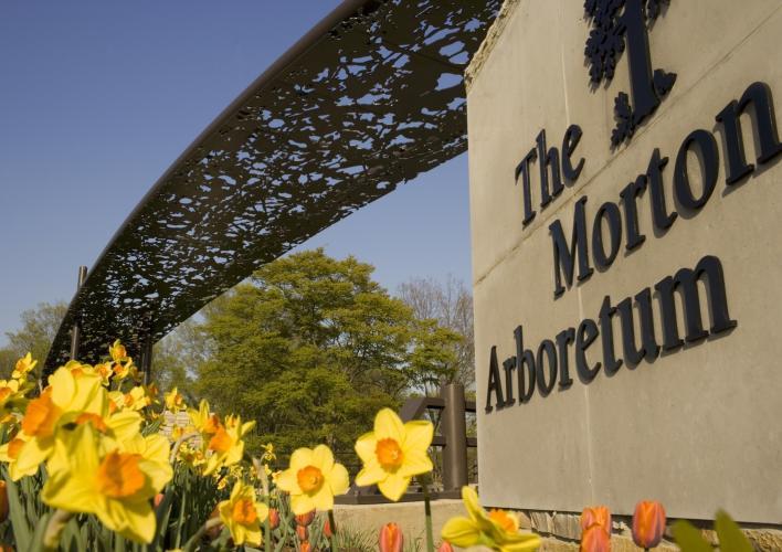 Morton Arboretum 01871.jpg