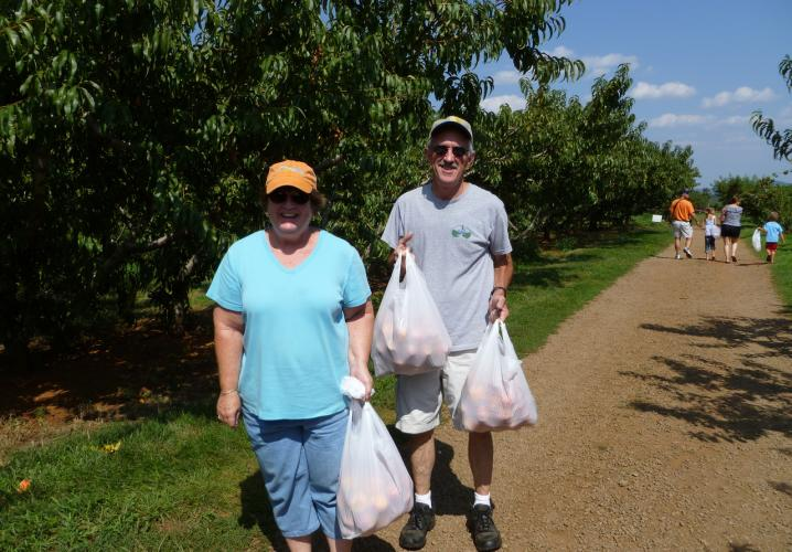 Peach pickers at Chiles Peach Orchard