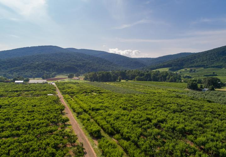 Aerial view of Chiles Peach Orchard property