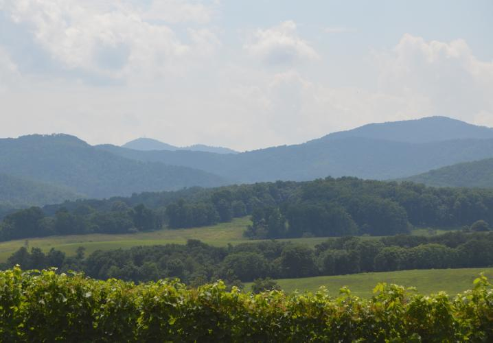 Virginia's Premier Wine & Beer Tour Service