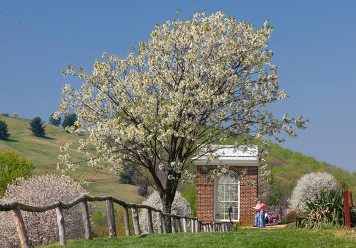 Garden Pavilion in Spring