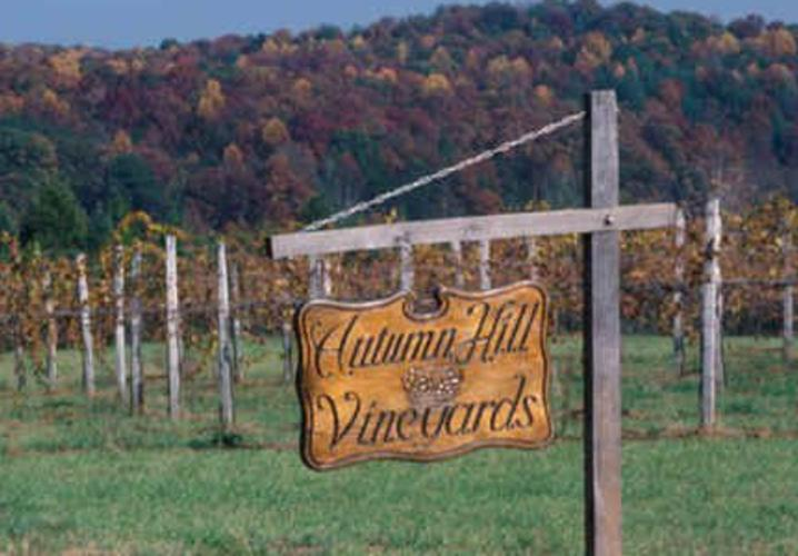 autumn hill vineyard