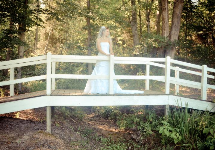 Our woodland bridge