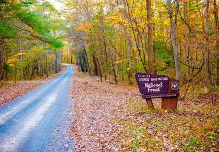 george washington forest